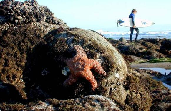 a look at rocky intertidal ecosystem and how they depend on each other Intertidal ecology will be taking a closer look at the rocky intertidal region it is of each other to take up less room.